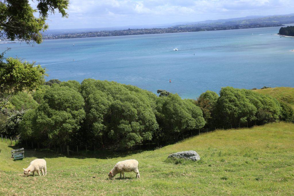 ニュージーランドっぽい景色