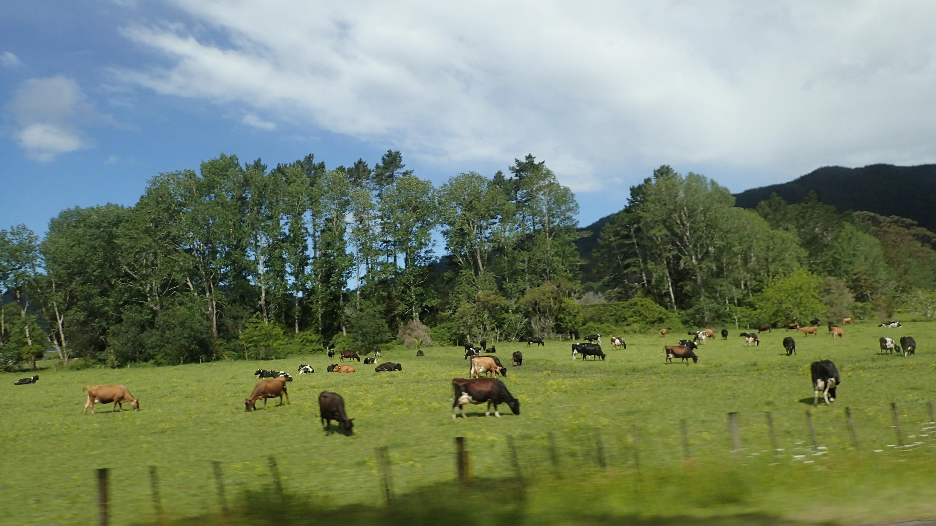 ニュージーランドの何気ない風景